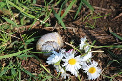 Snail and Flower at Ecola State Park