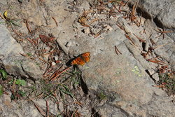 Butterfly at Provo River Falls